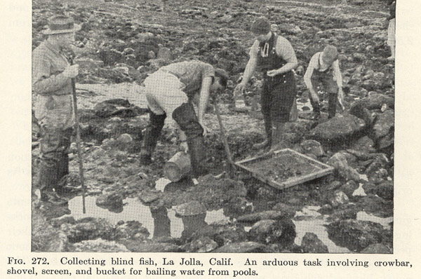 Blind Goby Field Workers at La Jolla in 1930s